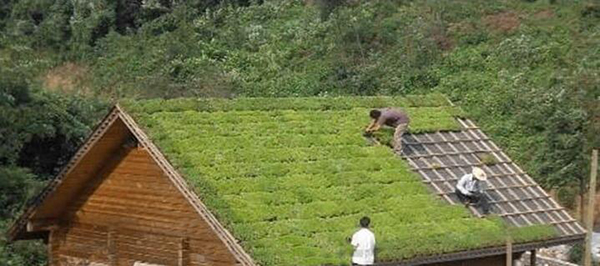Plastic Trays --- The Ideal Solution for Roof Greening