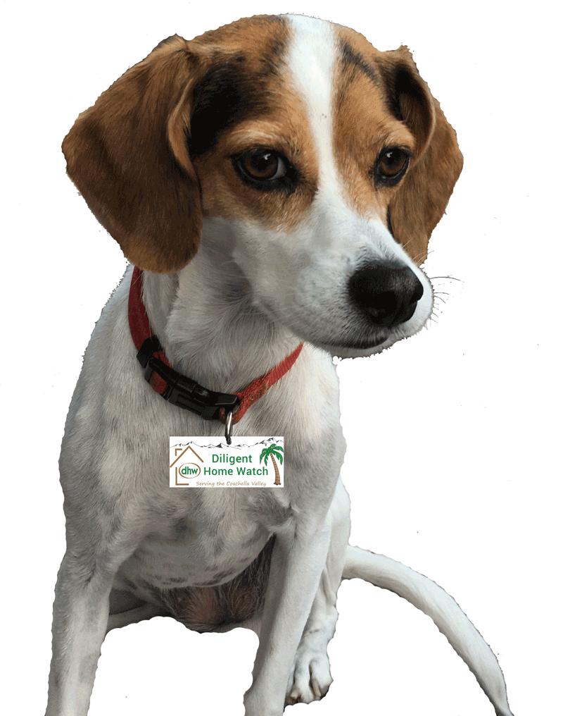 Diligent Home Watch Guard Dog Shyla