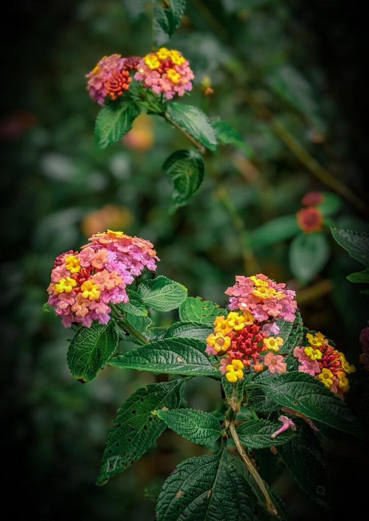Flowering foliage in the Hawaiian jungle along the Iao Tableland Secret Trail in Maui, Hawaii.