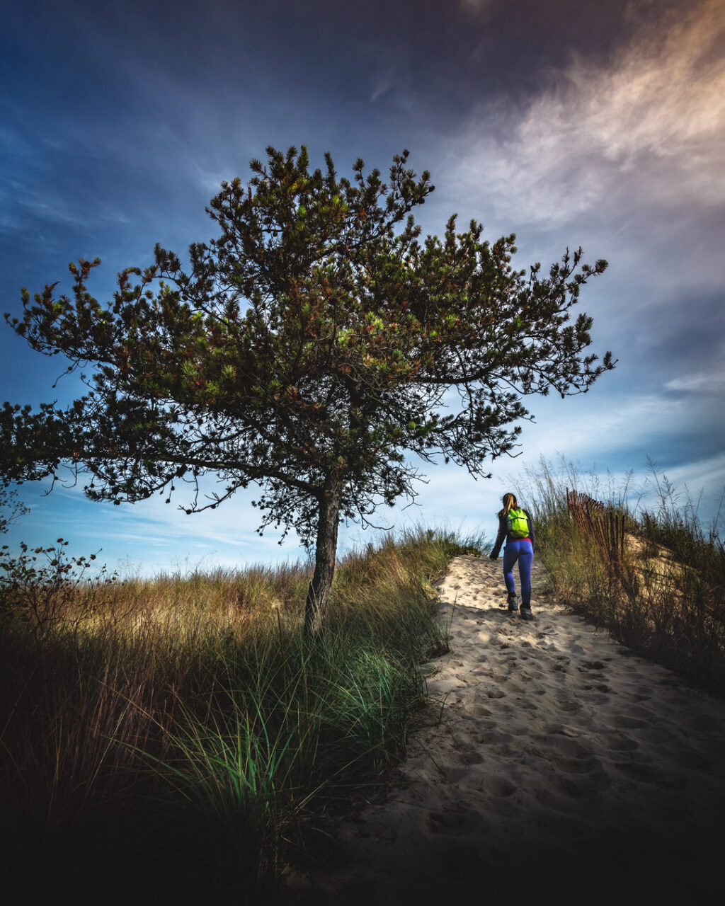 Woman hiking on sandy trail past wispy grasses and a gnarled conifer tree.