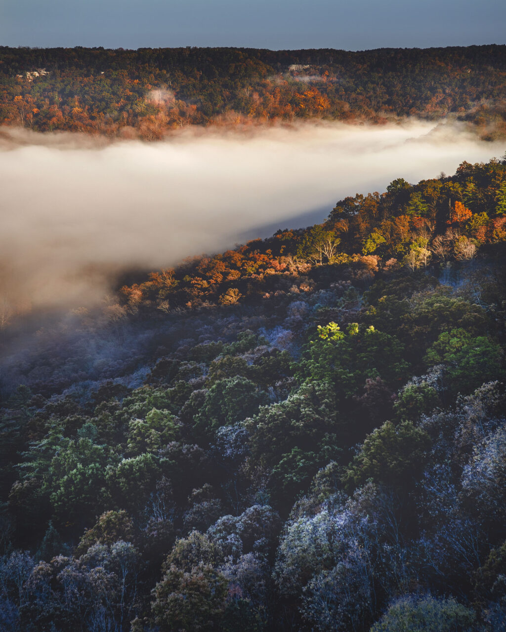 Dense fog pools in the Red River Gorge valley among fall foliage and frost-covered trees seen from Auxier Ridge Trail.