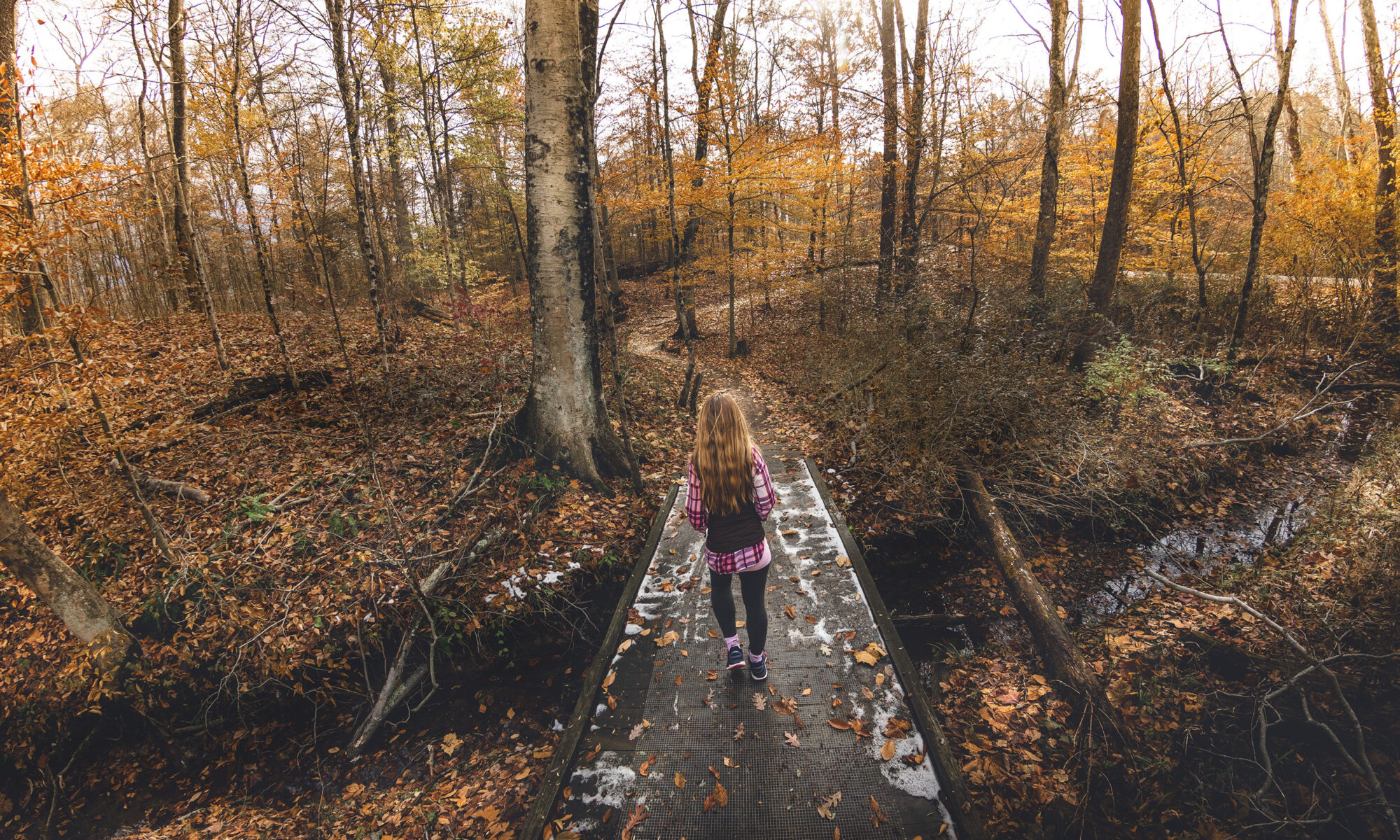 Woman hiking in autumn wooded area, Brum Woods, Batesville, Indiana.
