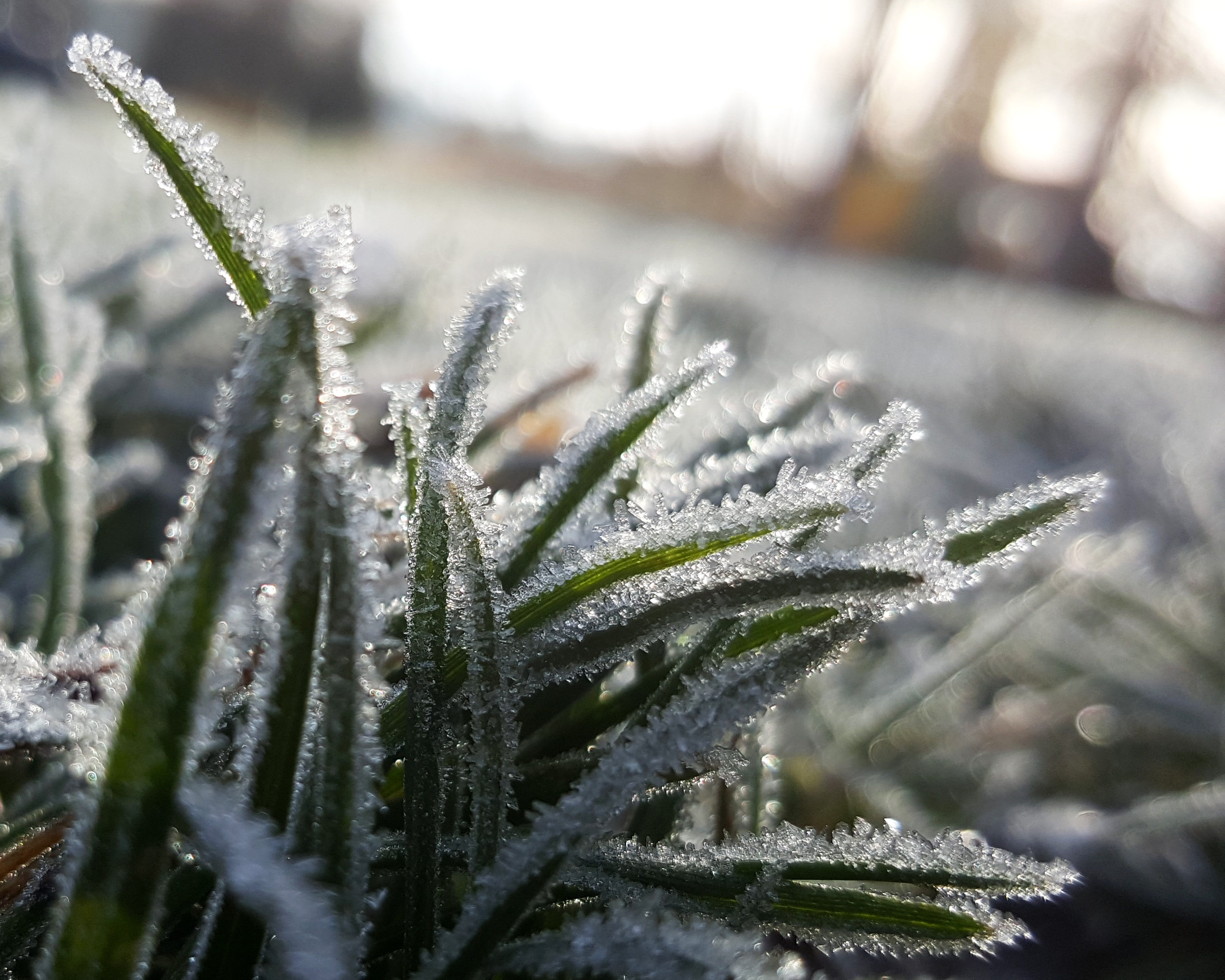 Frost Laws