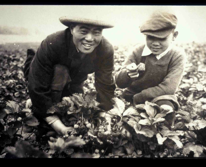 B.D. & Masa with Marshall Strawberries, 1919ca