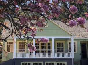 house with cherry blossoms, April 2019