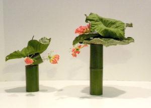 Ichiyo - 2-contrasting -lotus2