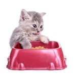 Cat diet food