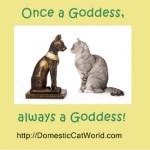 Cat Goddess