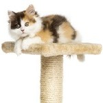 Cat on Cat tower