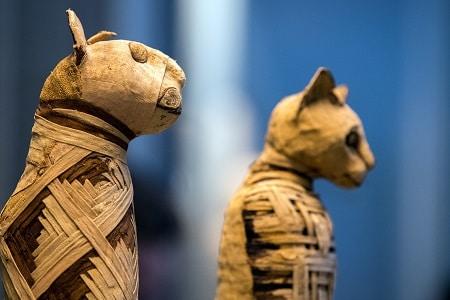 cats mythology worldwide
