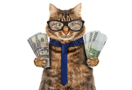 cats working for money