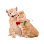 Domestic Cat Fun Facts