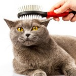 combing cat