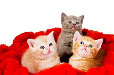 about kittens