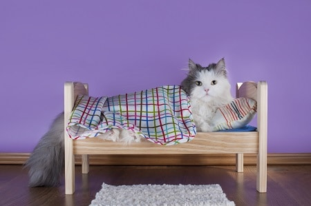 cat beds sleeping