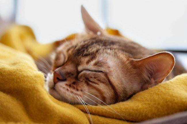 cat sleeping needs