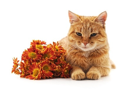 toxic flowers to cats