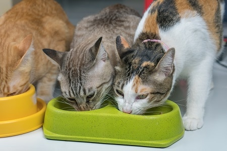 cat food and diet