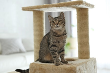 cat towers furniture