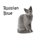 Russian Blue Cat More