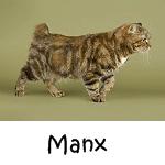 Manx Click Here