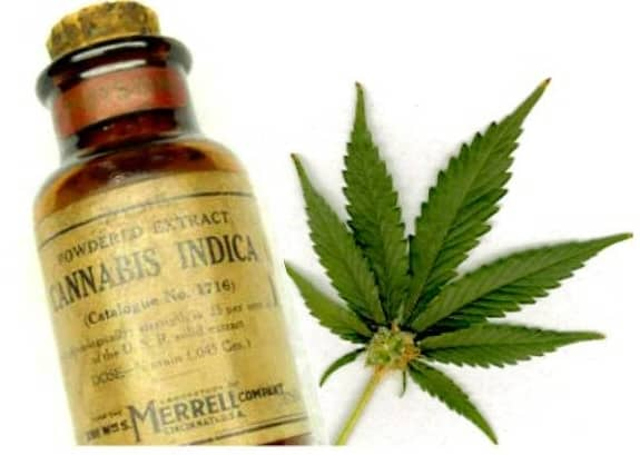 What The Federal Government Doesn't Want You To Know About Cannabis Oil