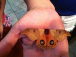 Hand holding moth costa rica