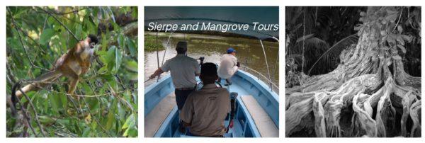 sierpe costa rica mangrove
