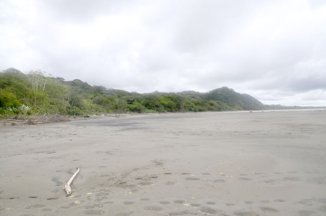 Playa Tortuga Costa Rica