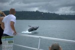 Whale watching boat uvita