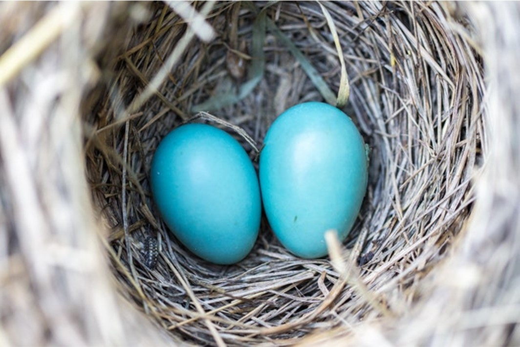 Story Seeds Prompt: Blue Eggs