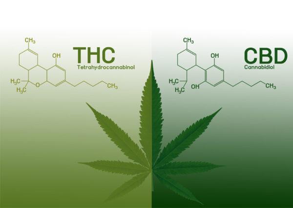 CBD vs. THC.