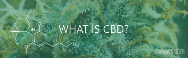 What Is CBD? An Introduction To CBD (Cannabidiol)