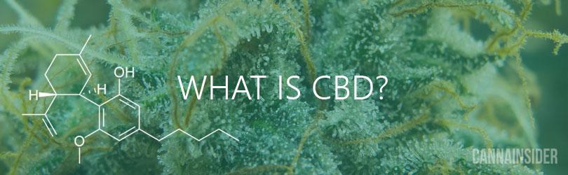 What Is CBD? An Introduction To CBD (Cannabidiol)