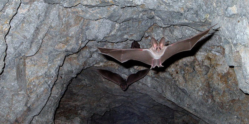 bats flying within a cave
