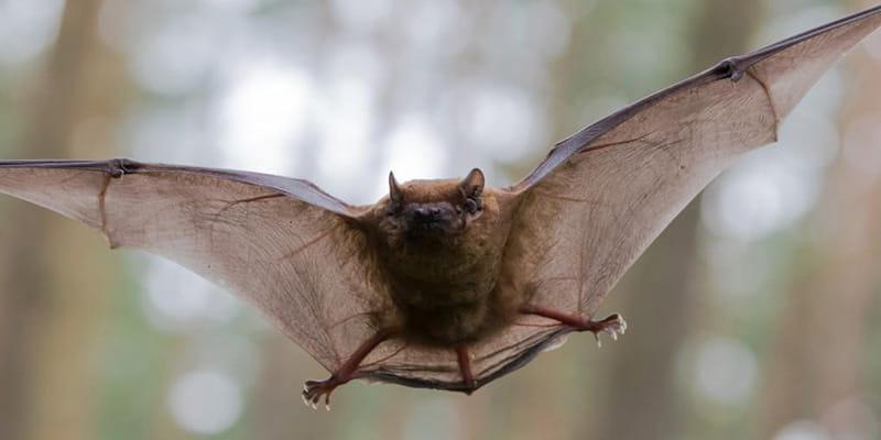 brown bat flying through the air