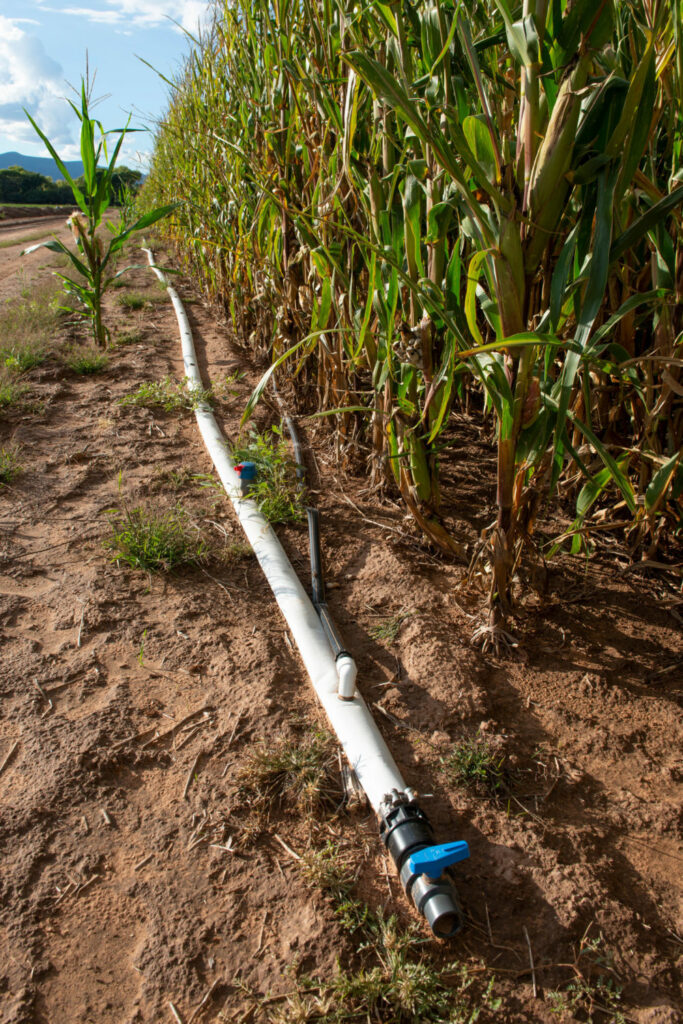 Farmers in the Verde Valley are increasingly switching to drip irrigation, which is more water-efficient than traditional methods.