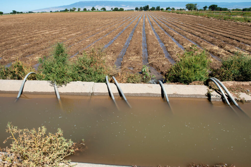 A field in Colorado's Grand Valley using flood irrigation. This is the cheapest, most common form of irrigation in the area, but it is also the least efficient, using more water than drip irrigation or sprinklers.