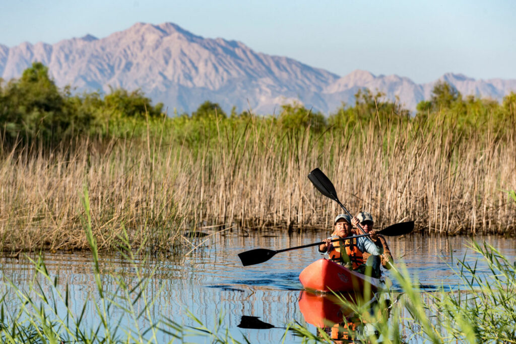 Botanist Celia Alvarado and Colorado River delta project leader Francisco Zamora kayak the waterways of Laguna Grande, a restored portion of the delta. The project uses agricultural return flow and purchased irrigation water to revive riparian habitat in the delta. PHOTO BY TED WOOD