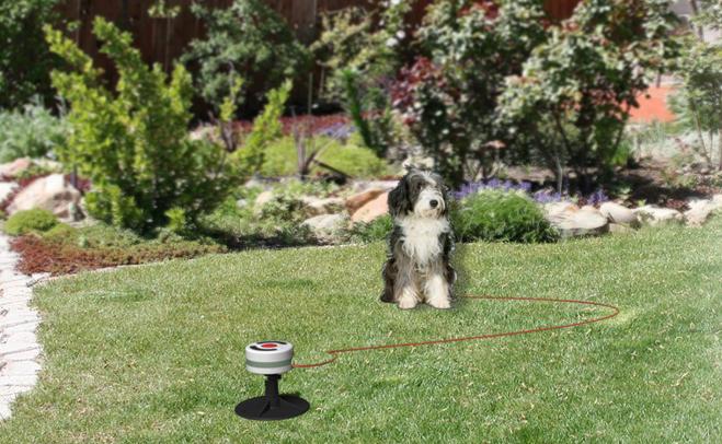 Electronic Dog Tether Design