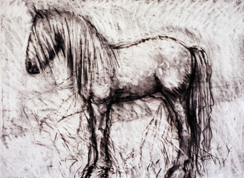 Horse, charcoal on paper. 22x30""