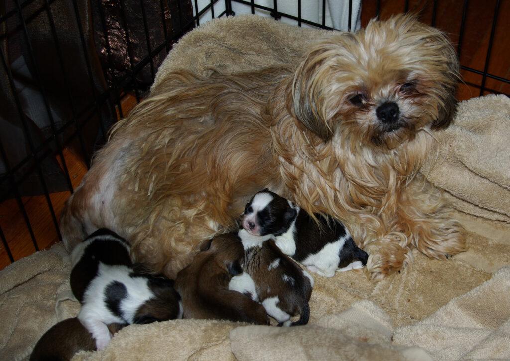 Jolie&Puppies