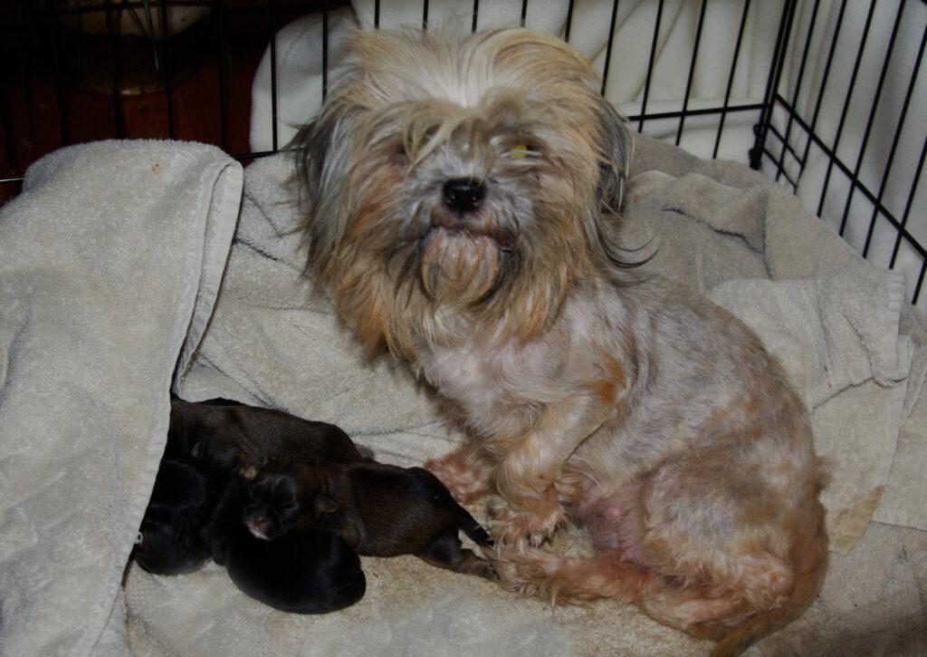 Juno&Puppies