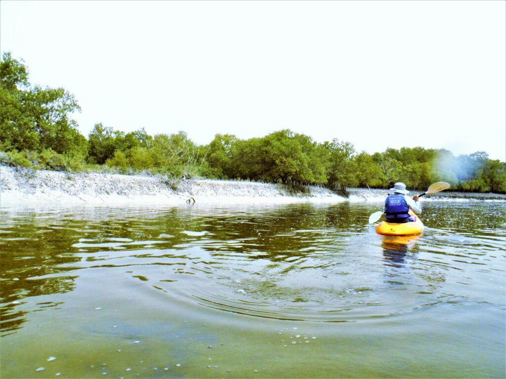 Kayaking at Abu Dhabi Mangrove