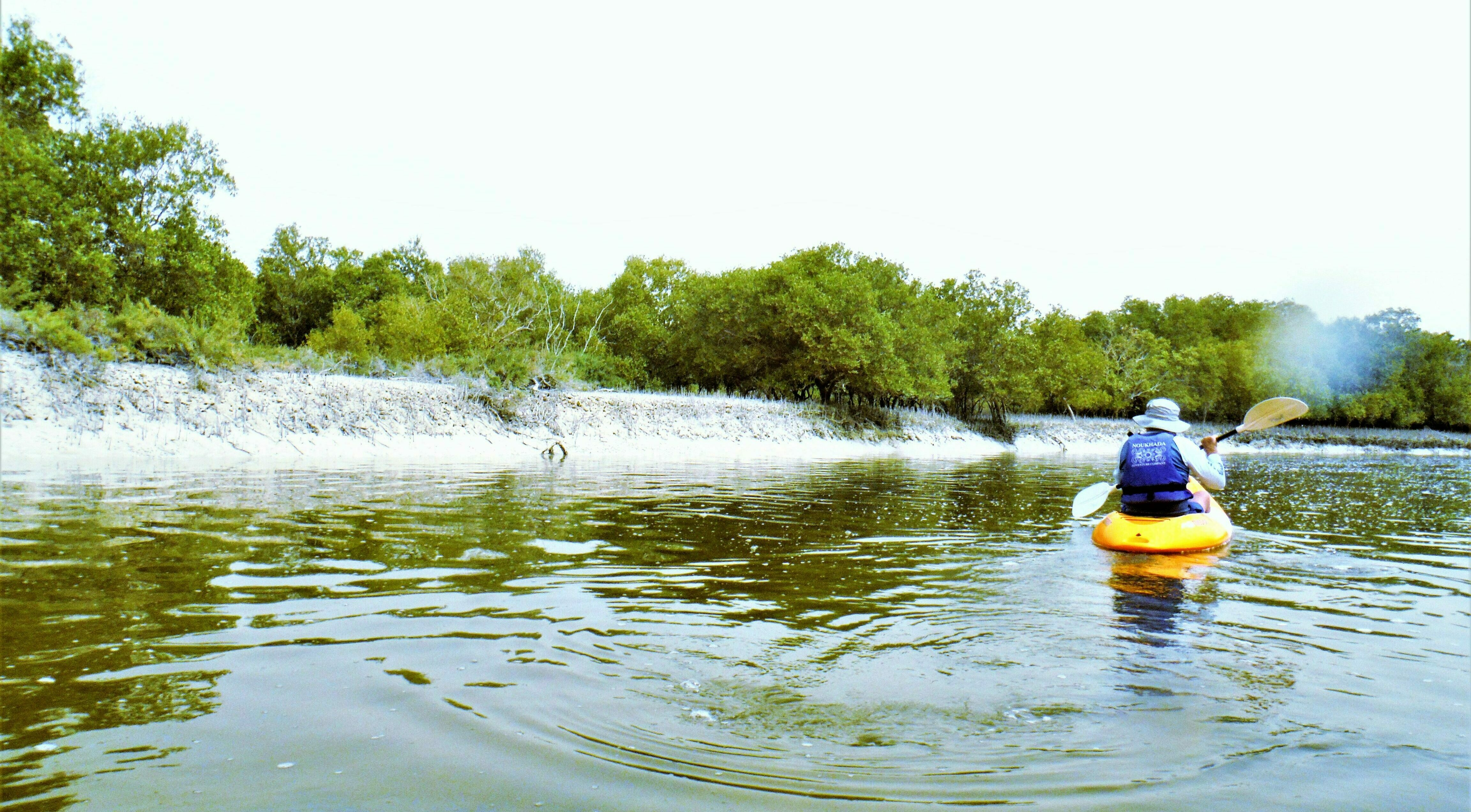 Kayaking at Abu Dhabi Mangrove