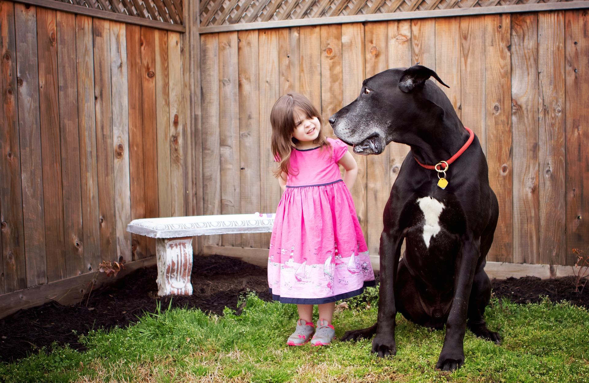 Large Dog and Small Girl