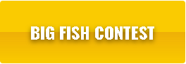 Button-FishContest