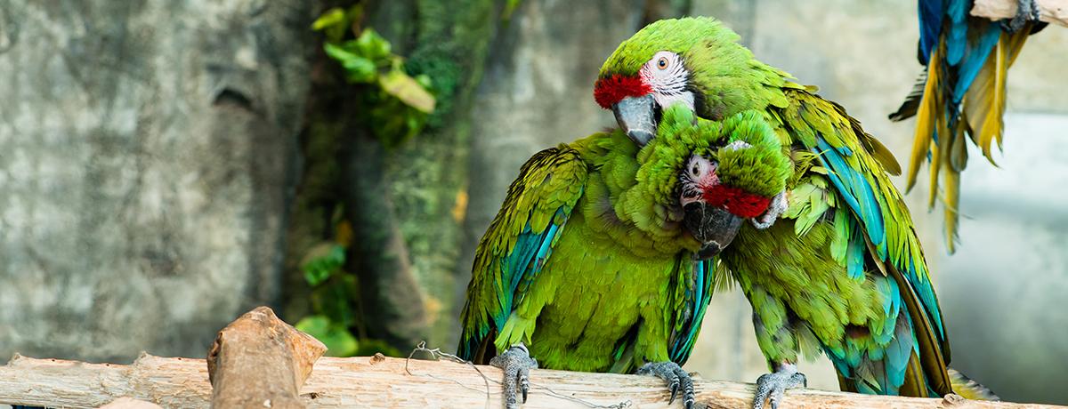 red fronted macaw, pet macaw, pet parrot, pet bird, grooming birds, grooming macaws, bird nail grooming, bird wing trims, avian and exotic animal clinic, phoenix, arizona, gilbert, arizona exotic clinic, arizona exotic animal hospital, animal hospital, exotic vet, veterinarian, exotic veterinarian