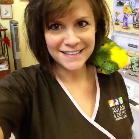 double yellow-headed amazon, amazon parrot, amazon parrots, pet parrot, pet parrots, exotic vet, exotic veterinarian