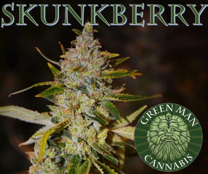 Skunkberry